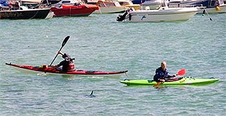 canoeists concerned by Shark in St Ives harbour